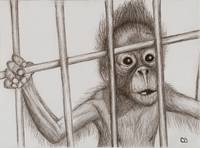 Monkey in jail