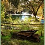 """""""Boardwalk Fanning Springs - Wild Lands"""" by BABowenphotography"""