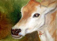 Jersey Cow aceo