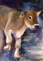 Brown Swiss Calf aceo