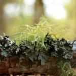 """""""Moss"""" by retrochic"""