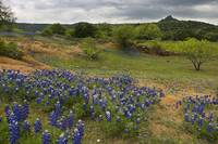 Texas Hill Country Spring 148