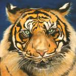 """Tiger eyes staring - painting"" by Spangles44"