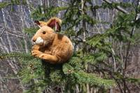 Bunny in a tree?