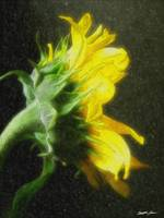 Sunflower 2 Watercolor