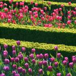 """Formal Flower Bed Rows"" by fizzyimages"
