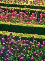 Formal Flower Bed Rows