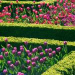 """Formal Flower Beds"" by fizzyimages"