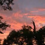 """""""July, Sierra Foothills Sunset"""" by rhole"""