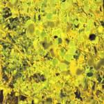 """0040 Yellow Edit"" by BarbaraLin"