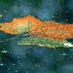 """""""Leaf"""" by tonybianchi"""