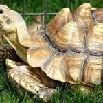 """""""Tortoise"""" by tonybianchi"""