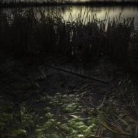 Stagnant Reeds Art Prints & Posters by Ryan Keil