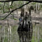 """""""Yo-yo on the creek"""" by smayer"""