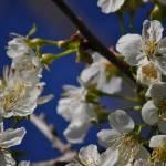 """Flowering Sky"" by gailcorrow"