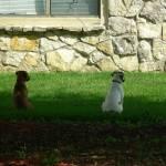 """""""Puppies"""" by Kennie"""