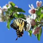 """""""Butterfly And Blue Sky"""" by Lorraine_Sommer"""