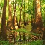 """Tupelo Swamp In HDR"" by JGetsinger"