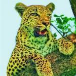 """""""Leopard"""" by Leksele"""