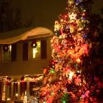 """Big Christmas Tree in Front Yard"" by Rudderow"
