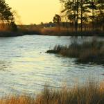 """Easter in Maryland on the Chesapeake"" by Rudderow"