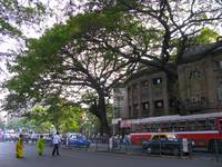 Colaba Bean Bag Tree