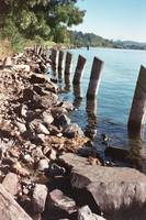 Coulon Park Shoreline