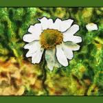 """""""Impresionist Daisy"""" by dbwalton"""