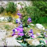 """""""PurpleFlowers"""" by skipjensen1"""