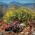 """Cactus&Flowers"" by skipjensen1"