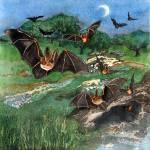 """Flying Bats"" by lindalou2"