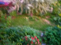 lblurred frontgarden26x