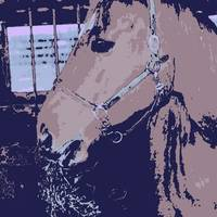 Pop Art Farm Horse