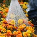 """""""Getting Watered"""" by GabeGinsberg"""