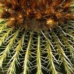 """""""Cactus closeup"""" by jupiterqueen"""