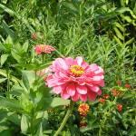 """Flower 018c Pink Spring Floral Garden"" by Ricardos"