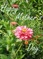 Mothers Day Card 018c