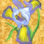 """Iris"" by FGerety"