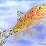 """Cutthroat Trout"" by FGerety"