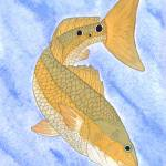 """Redfish"" by FGerety"