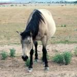"""Ranch_0020"" by segami"