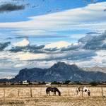 """Ranch_0031"" by segami"
