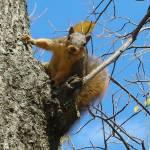 """""""Squirrel"""" by chrisallenz"""
