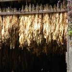 """Tobacco Barn"" by chrisallenz"