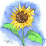 """Sunflower"" by FGerety"