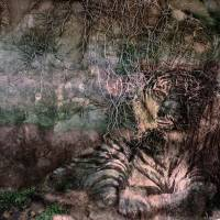 Stone Tiger Art Prints & Posters by Jim Armstrong