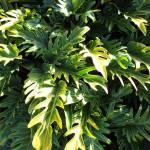 """""""green leaf design"""" by jupiterqueen"""