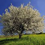 """Spring Frühling Greece Ελληνικά Ελλαδα :: eu-moto"" by eu-moto"