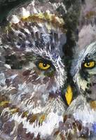 Owl Eyes,  Wildlife Watercolor Painting