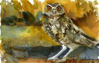 Hoot, Watercolor Owl Painting Art